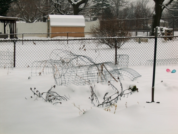 Garden Cages in the Snow